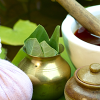 kerala ayurveda treatment herbs